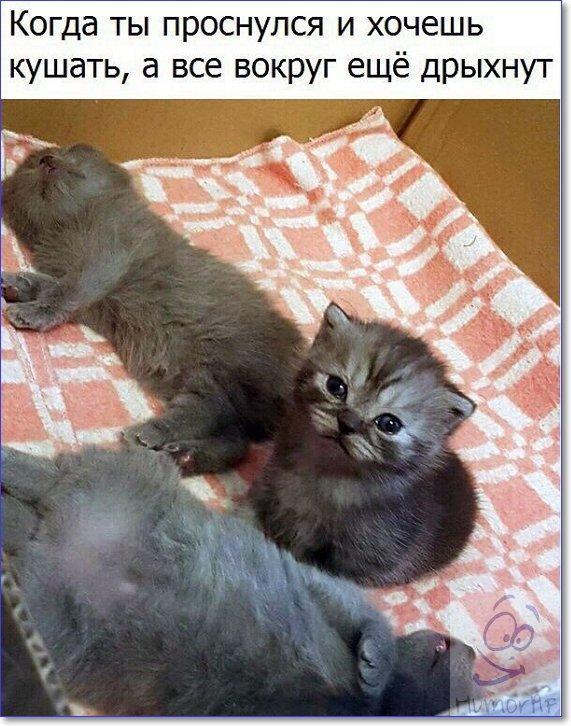 Приколы с кошками картинки