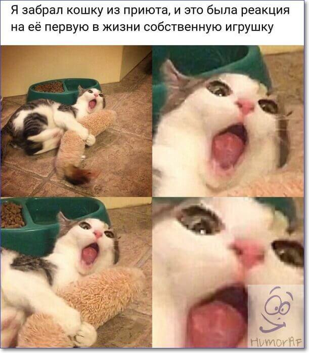 Смешные картинки с надписями до слез