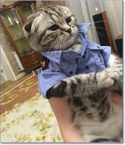 Котик генерал полиции