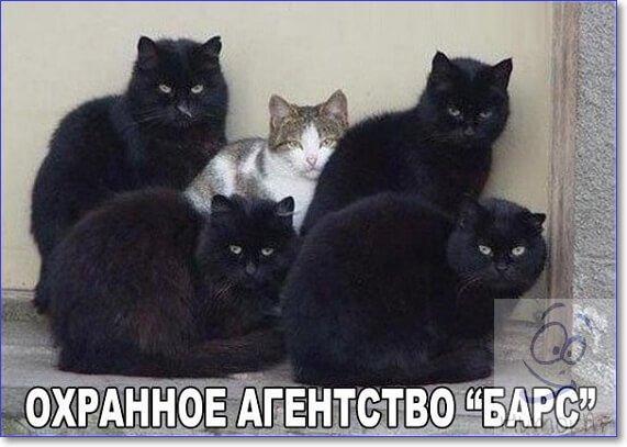 Фото приколы с надписями смешные очень