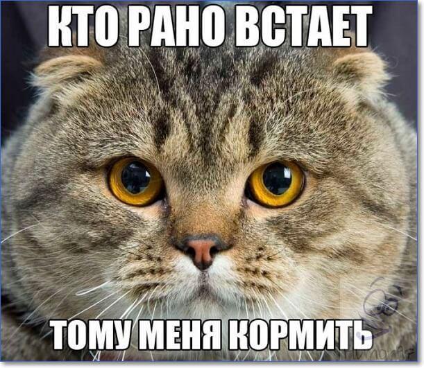 Смешные кошки и коты фото с надписями