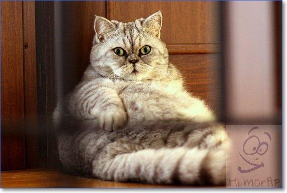 Большие коты картинки