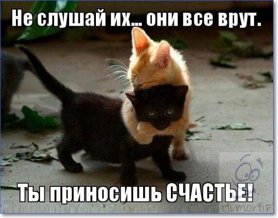 Кошки фото приколы