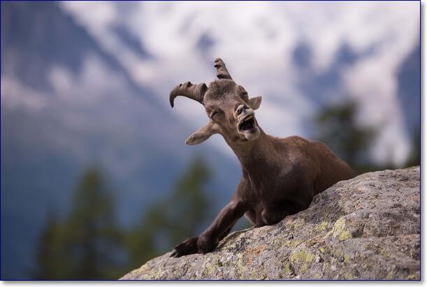 Смешные фото зверей