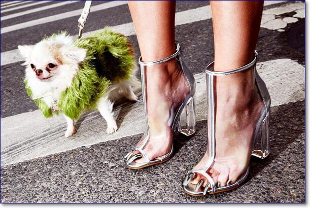 Собачка в зеленой шубке и прозрачные женские туфли
