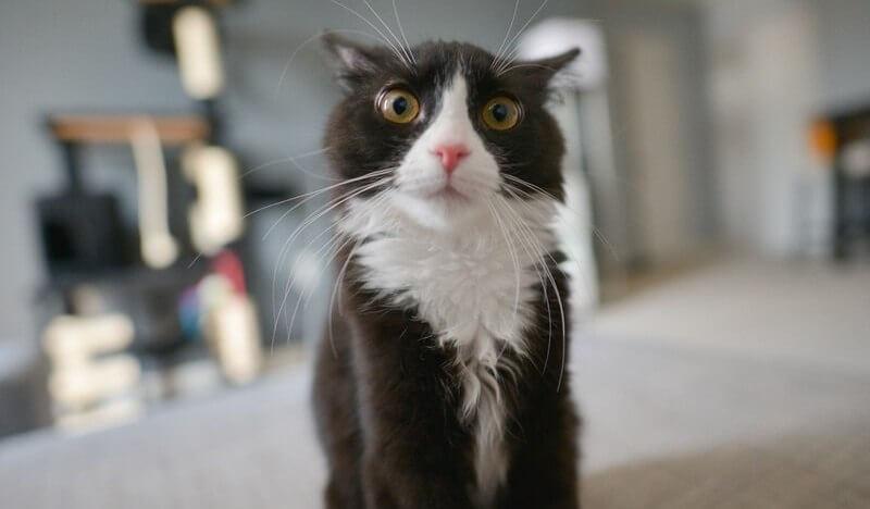 Картинки про котиков