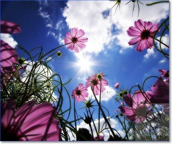 Смотреть картинки красивых цветов