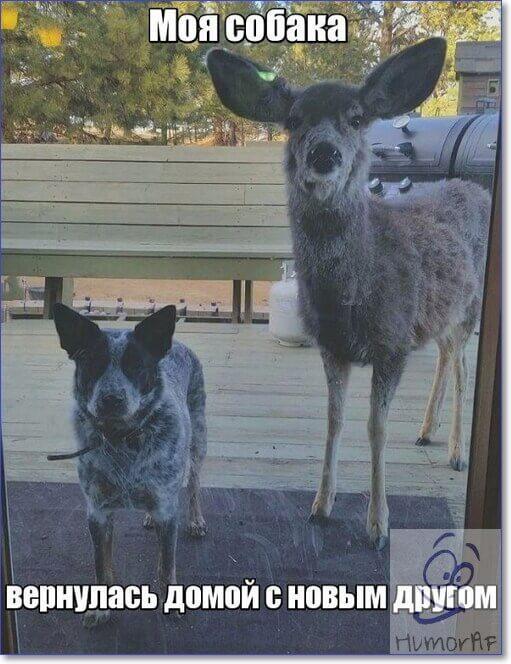 Самые смешные фото