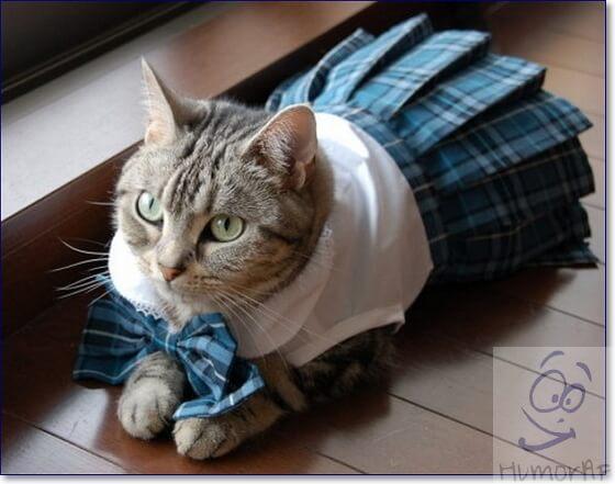 Косплей кошки