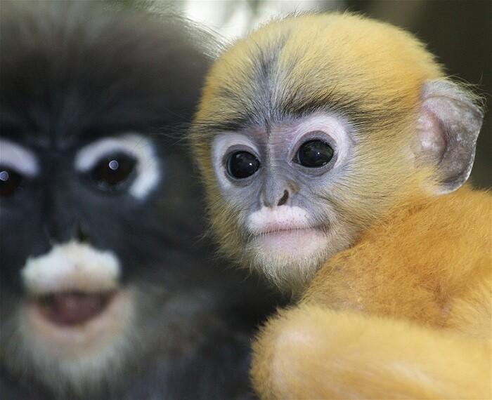 Цветные картинки животных