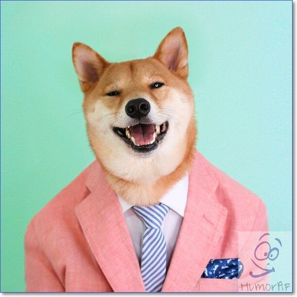 Смешные фото животных