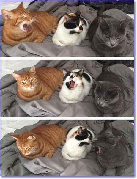 Доброе утро картинки прикольные смешные