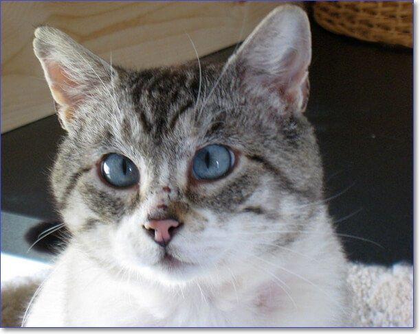 Фото смешных котов