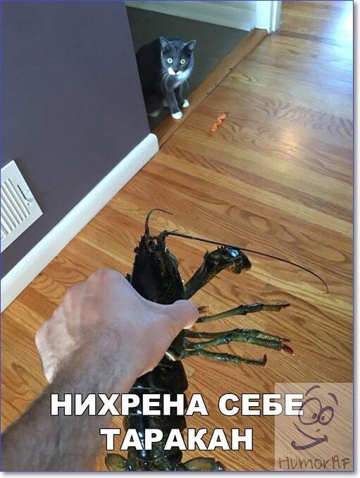 Очень смешные картинки