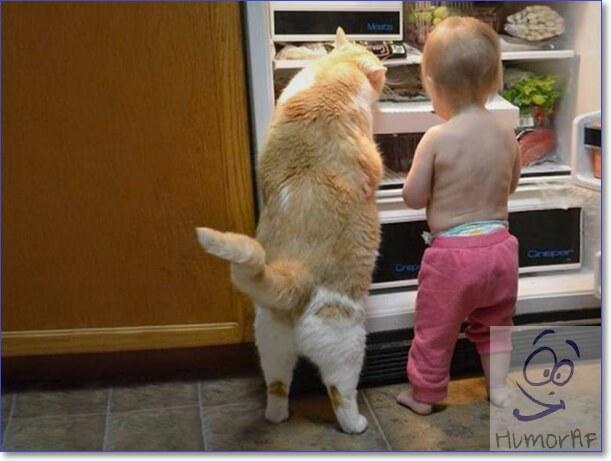 Смешные картинки с животными
