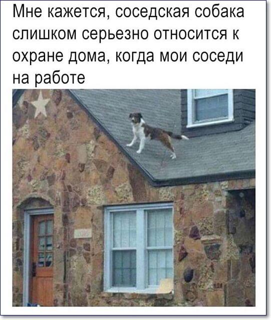 Смешные картинки вк
