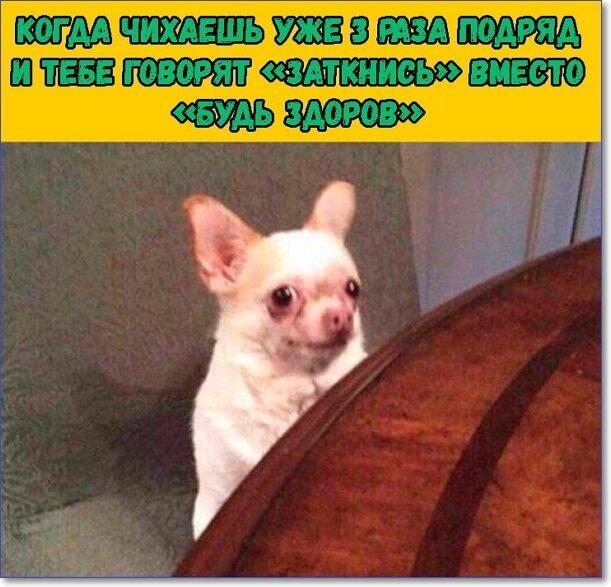 Фото приколы смешные до слез