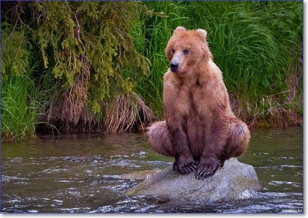 Фото животных красивые и смешные
