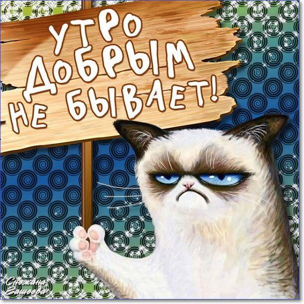 Хорошего дня юморные открытки, енота смешная