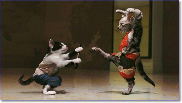Смешные кошки фото
