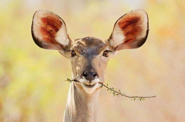 Смешные фото животных новые очень смешные