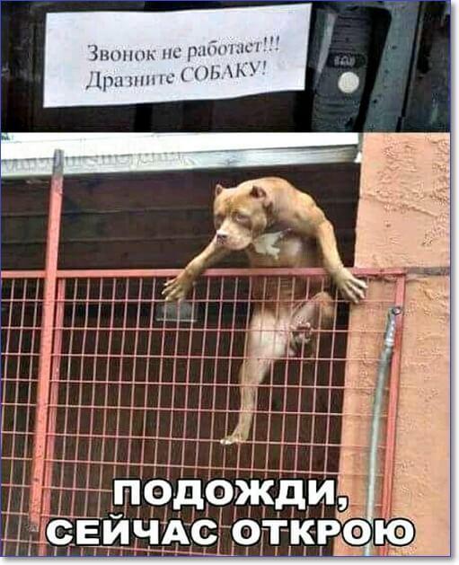 https://cdn.humoraf.ru/wp-content/uploads/2018/05/veselye-kartinki-dlya-podnyatiya-nastroeniya-s-nadpisyami-58.jpg
