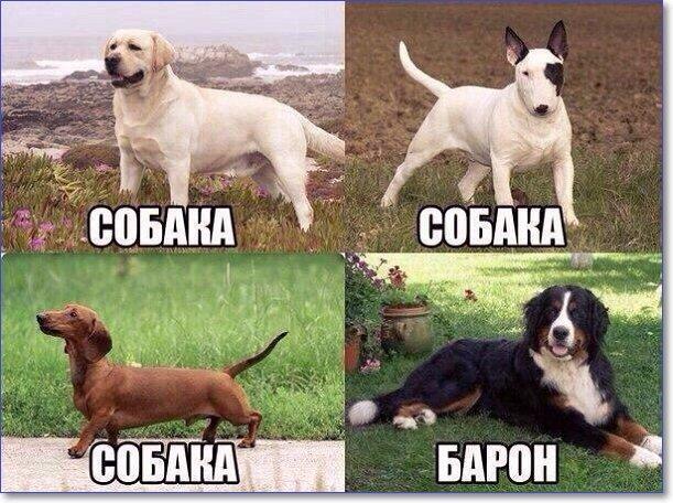 Самые смешные картинки в мире