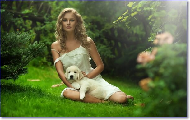 Собаки фото красивые и смешные