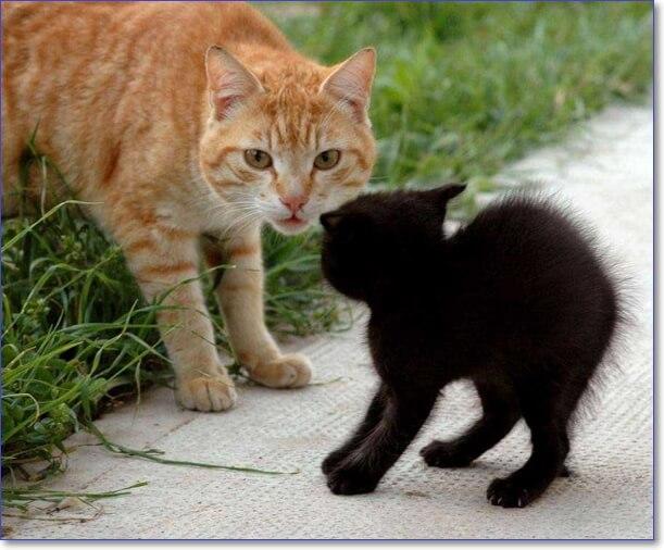 Фото котят милых и пушистых и смешных