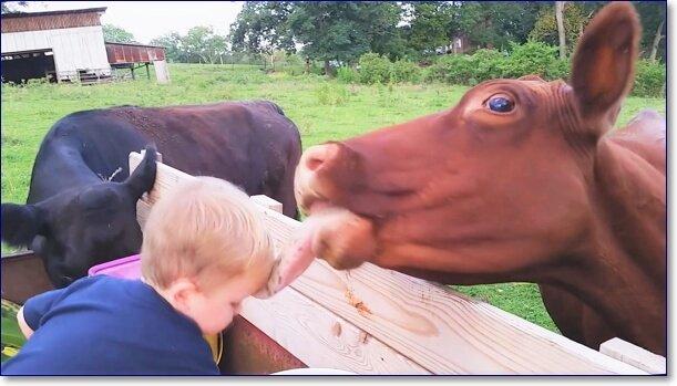 Прикольные фото с животными до слез