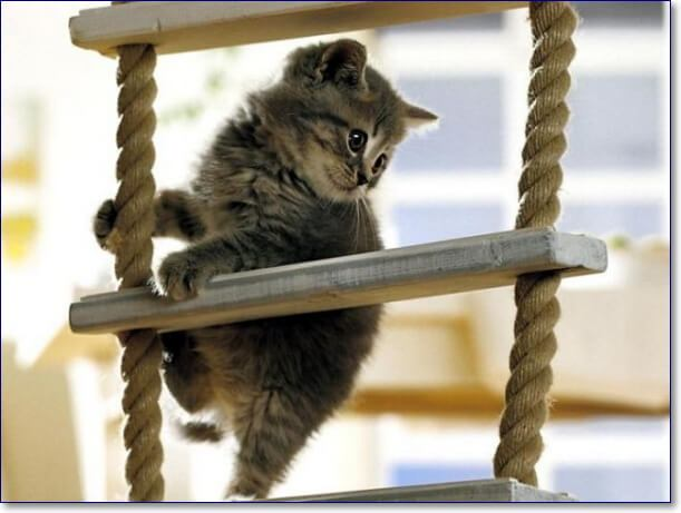 Смешные картинки с котами