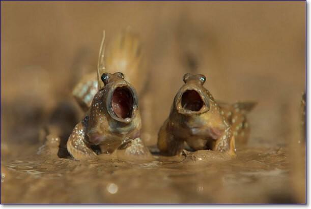 Смешные животные до слез фото