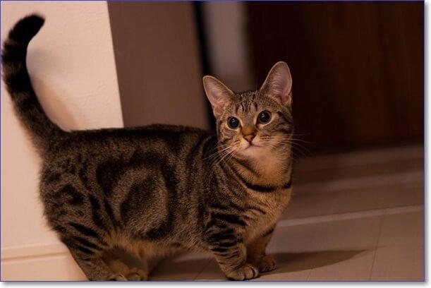 Фото кошек и котят разных пород прикольные