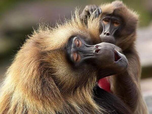 Фото обезьяны смешные