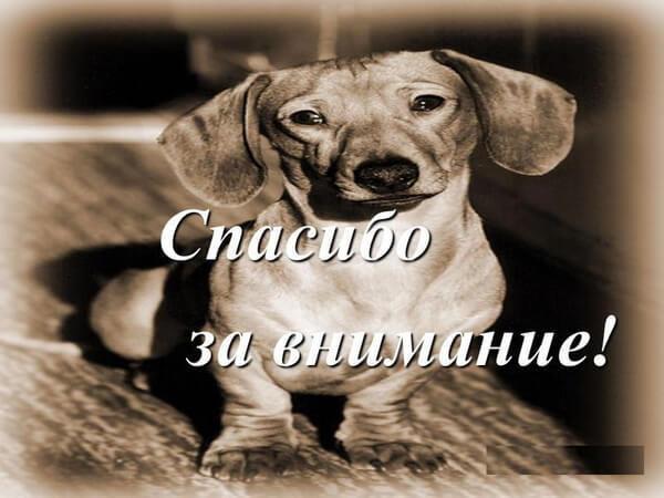 это картинка собаки спасибо за внимание оптика