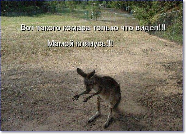 Смешные фото животных с надписями