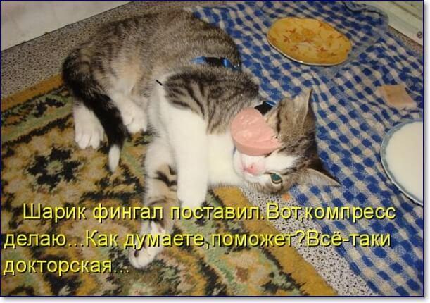 Прикольные картинки фото животных с надписями прикольными надписями, открытки
