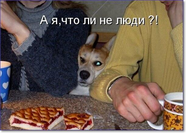 Смешные картинки юмор животные с надписями, номинация прикольные картинки
