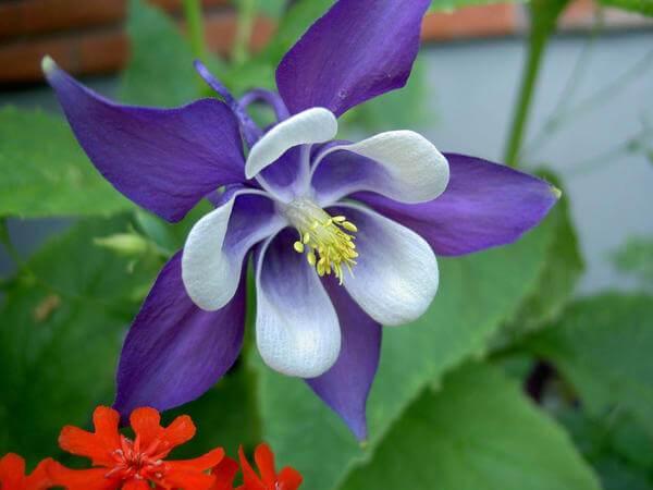 Цветы фото красивые