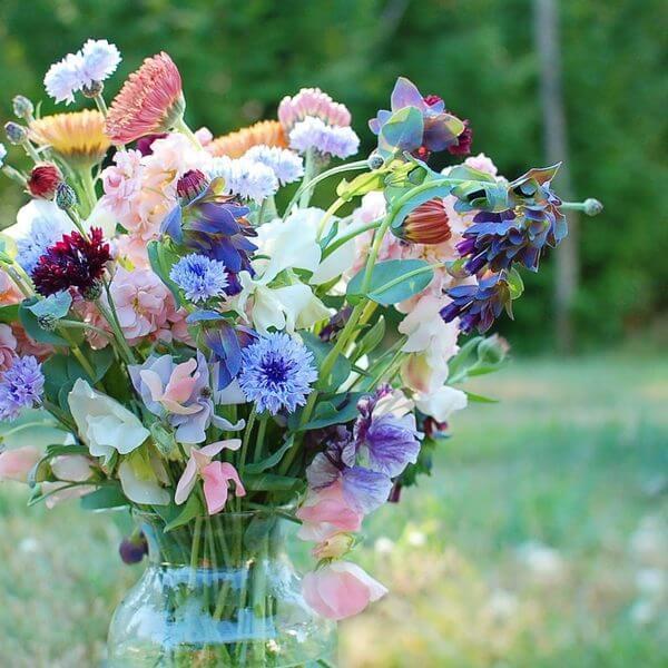 фото открытки полевые цветы в букетах фото антивирус распространяется