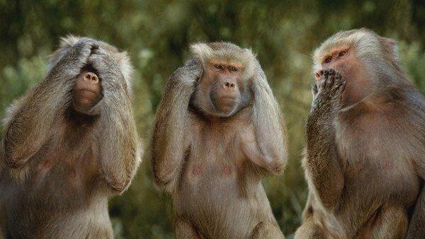 Фото обезьян прикольные