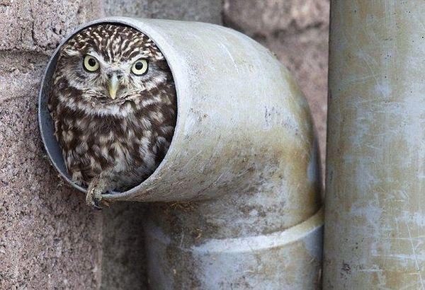Фото совы прикольные