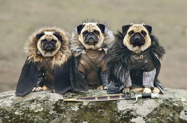 Прикольные фото собак