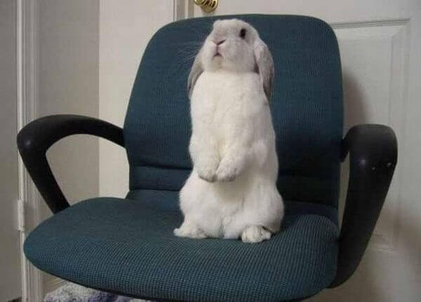 Дню, смешные картинки с надписями с кроликами