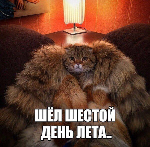 Приколы про холодное лето