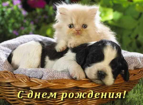 Поздравления с днем рождения открытки животные