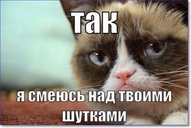 Смешные фото котов с надписями