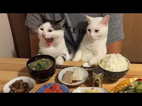 Забавные животные приколы видео смотреть бесплатно