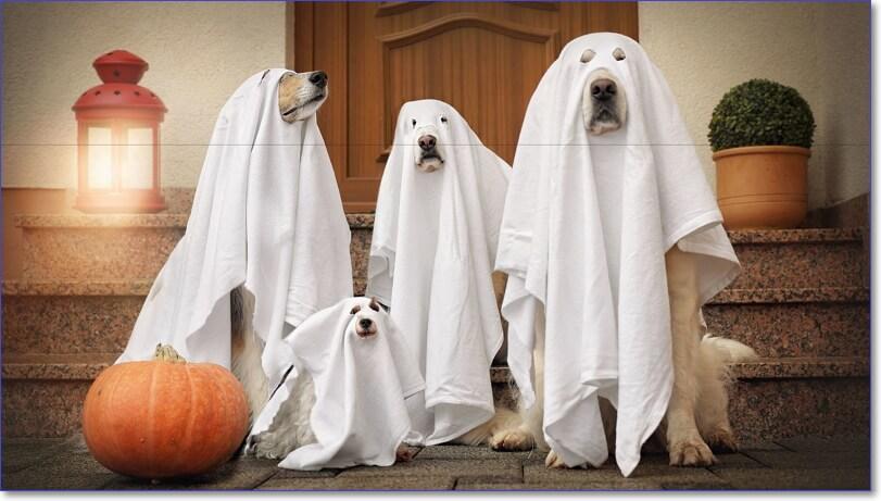 Фото Хэллоуин