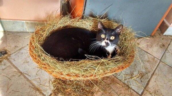 Фото приколы с котами